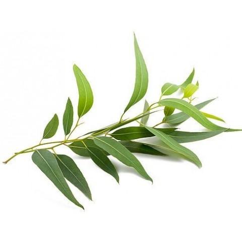Arbatmedžio eterinis aliejus TEA TREE, Sattva Ayurveda, 10ml
