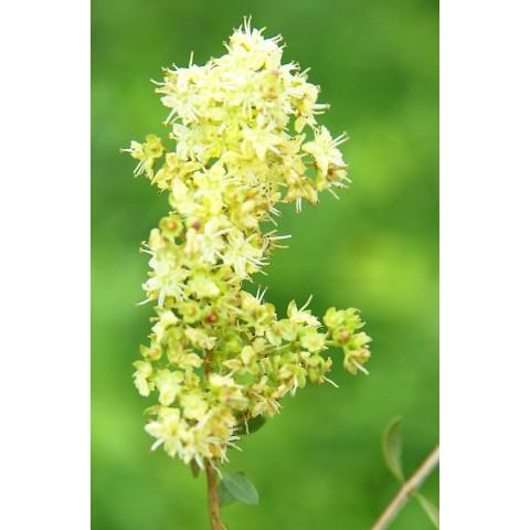 Augaliniai plaukų dažai, Spalva nuo oranžinės iki sodriai raudonos, Khadi Naturprodukte, 100g
