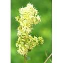 Augaliniai auksinio rudumo plaukų dažai GOLDEN BROWN, Khadi Naturprodukte, 100g
