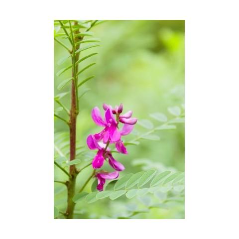 Augaliniai pelenų rudumo spalvos plaukų dažai Ash Brown, Khadi Naturprodukte, 100g