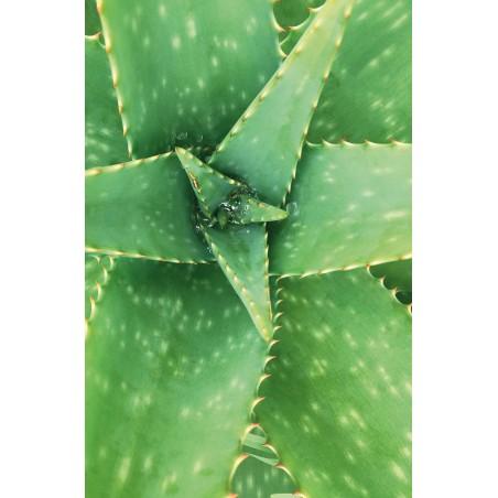 Apsaugantis plaukų tonikas WONDER, Khadi Naturprodukte, 100 ml