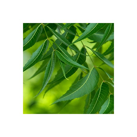 Valantis plaukų aliejus Bio Active Detoxify, Ayumi, 150 ml