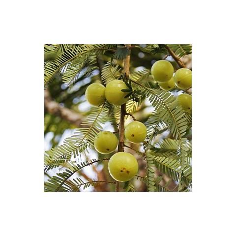 Praturtintas kokosais plaukų aliejus Coconut Enriched, Ayumi, 150 ml